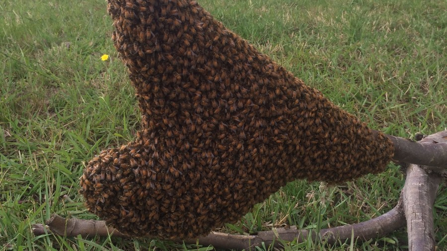 Bee Swarms