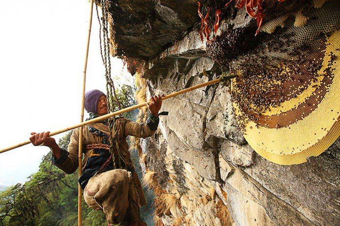 Himalayan Bees Make Psychedelic Honey